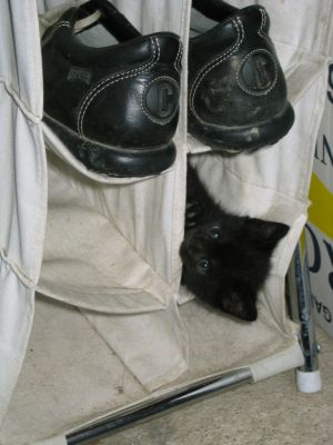 special chat ;o) Normal_chaton_noir_chausures